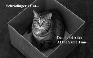 Cat_in_the_box2